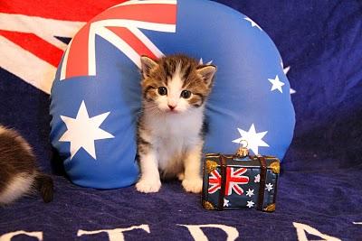 انتقال گربه به استرالیا